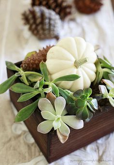 pumpkins and succulents #fall