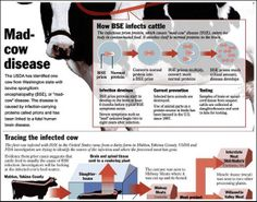 Texas mad cow | ... Encephalopathy - Case of Mad Cow Disease is Found in the U.S....Still want to eat Beef?!!