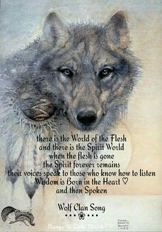 """I think the wolf has become what I would call a """"temporary totem"""".those are the animals that come into your life for only a short time to teach you things Native American Spirituality, Native American Wisdom, Wolf Images, Wolf Pictures, Timberwolf, Wolf Spirit Animal, Wolf Quotes, Wisdom Quotes, Wolf Love"""