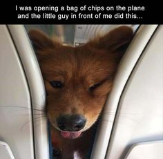 Afternoon Funny Picture Dump 37 Pics