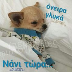 Good Night, Dogs, Animals, Nighty Night, Animales, Animaux, Pet Dogs, Doggies, Animal