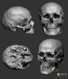 Skull Scan by Chris Rawlinson, via Behance