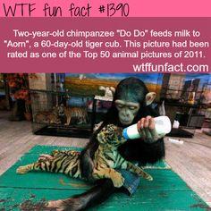 awwwwwwwwwwwwwwwwwwwwwwwwwwwwwwwww.............................................................................. I love animals