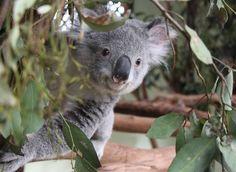 Park Information | Featherdale Wildlife Park - Sydney Australia