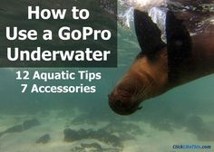 In this post, you'll learn how to use GoPro underwater. These underwater tips and accessories will help you take great underwater shots right away. Before you head out on your next adventure, take a few minutes to review these tips. 12 Tips for Using a GoPro Underwater Clean the gasket: Make sure that there is no …