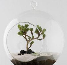 modern-plants-zen