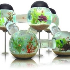 1000 Images About Fish Bowl Ideas On Pinterest