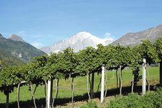 TASTE THE WINE. Le bollicine più alte d'Europa ai Salotti del Gusto dell'Alta Badia: CAVE DU VIN BLANC DE MORGEX ET DE LA SALLE