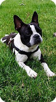 French Bulldog Dog For Adoption In Valley Center Ca Adn 680831 On Puppyfinder Com Gender