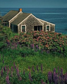 My dream home.Cottage by the Sea, Monhegan Island, Maine @ Ronald Wilson Photography Cottage Living, Cozy Cottage, Coastal Cottage, Coastal Homes, Cottage Homes, Maine Cottage, Cape Cod Cottage, Living Room, Cottages By The Sea