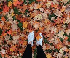 รูปภาพ autumn, fall, and converse