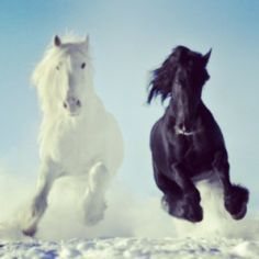 Kicking up our hooves to Sunday power! kick your day off with beauty, power, & strength