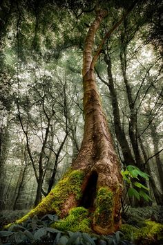 Leyduin forest, Holland -