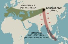 A tale of two Pleistocene realms: Neanderthals spread east and west through Eurasia - did Denisovans spread north to south?  The Denisovans, mysterious cousins of the Neanderthals, occupied a vast realm stretching from the chill expanse of Siberia to the steamy tropical forests of Indonesia - suggesting the third human of the Pleistocene displayed a level of adaptability previously thought to be unique to modern humans.