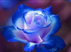 Archangel Michaël Rose www.spiritueelbegeleider.blogspot.com