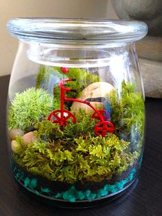Moss+Terrarium+Miniature+Garden+w/Tricycle+by+HopHouseTerrariums,+$39.50