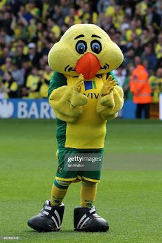 Football Gear, Football Fans, Captain Canary, Norwich City Fc, Sports Advertising, British Football, Watford, Southampton, Public Relations
