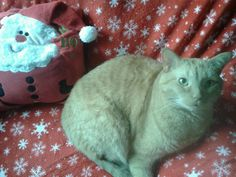 Official picture with Santa 2012- Morris