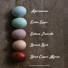 Egg Colors and Breeds -  @PortlandChickens
