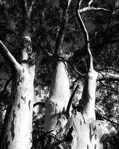 Beautiful   #españa #Spain #monochrome #blackandwhitephotography #bnw #nature #naturephotography