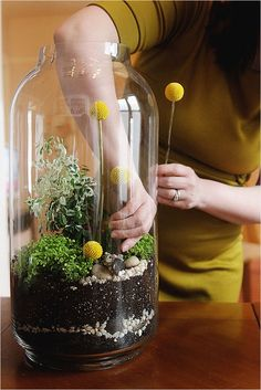 terrarium diy & more