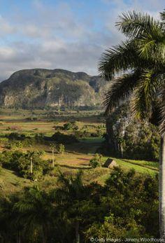 Situées dans la province de Pinar del Rio à Cuba, les mogotes, ces éclosions rocheuses de la vallée de Viñales, intriguent. Recouvertes d'une végétation luxuriante, elles contrastent avec cette terre rouge très fertile sur laquelle poussent les plantations de café et de tabac.