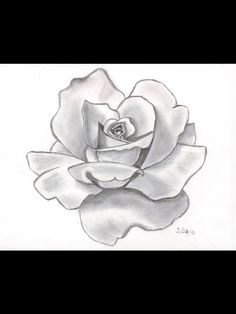 Pencil sketch rose a flower drawing draw a beautiful flower angel drawing of pencil sketches rose Pencil Drawings Of Flowers, Flower Sketches, Drawing Sketches, Drawing Flowers, Rose Sketch, Pencil Shading, Drawing Of A Rose, Drawing Art, Pencil Art