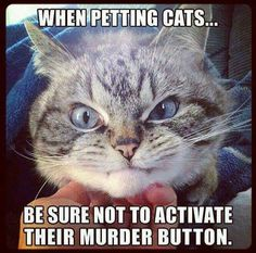 "There's a fine line between ""that feels good"" and ""I'll bite your face off""! LoL #cathumor"