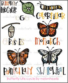 butterfly life cycle bundle by melonheadz