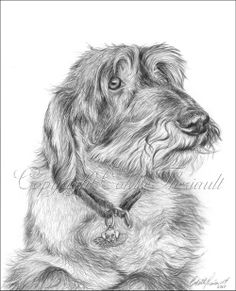 Arte Dachshund, Wire Haired Dachshund, Scottish Terrier, Animal Coloring Pages, Realistic Drawings, Beautiful Drawings, Pet Birds, Pencil Drawings, Animals And Pets