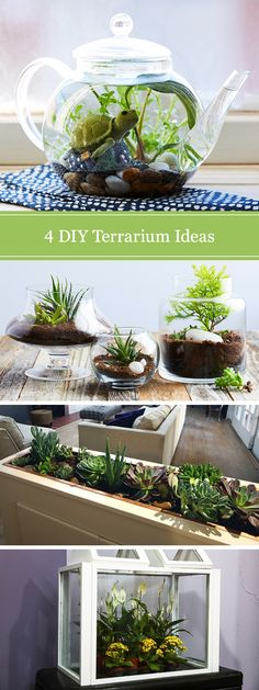 Wondering how to make a DIY terrarium? Look no further than our 4 creative ideas. See how to grow plants in closed glass containers and how to set up succulents in a larger open-air display.