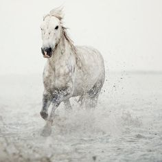 Modern Nature Photography, Minimalist Art, White horse in water, Horse Photography, Large Wall Art, Fine Art Photography - Wild at Heart