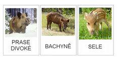 Children, Animals, Young Children, Boys, Animales, Animaux, Kids, Animal, Animais