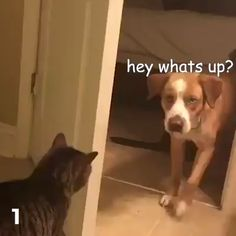 Pet lovers Cats and dogs Cute Funny Animals, Funny Animal Pictures, Funny Cute, Funny Dogs, Cute Cats, Amor Animal, Mundo Animal, Dog Memes, Funny Memes