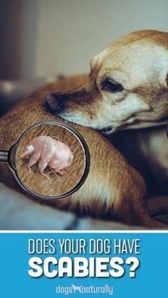 cf8fbe967d4d8011f0709b343d519037 - How To Get Rid Of Mange In Dogs At Home