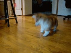 Click to see the gif of this cutie bouncing around.