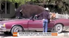 Meanwhile, in Canada – 25 Pics