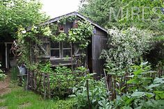 Chemin vers le potager et l'abri de jardin. C0877 | Mires Paris
