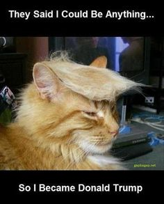 Funny Meme About Cat vs. Donald Trump