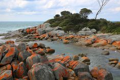 The 10 Best Things to do in Tasmania in Summer - Bay of Fires