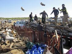Native Americans and eco-activists have camped for five months in a bid to block a new $4billion pipeline. Pictured, volunteers toss logs at an oil pipeline protest encampment near the Standing Rock Sioux Reservation in southern North Dakota