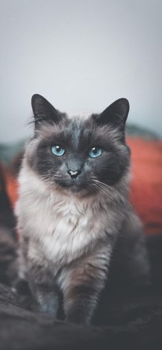 Cat Wallpapers for Phone 2021 - I Like Cats Very Much