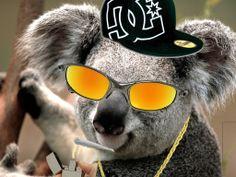 coala legalizador