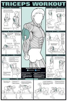 """Triceps Workout 24"""" X 36"""" Laminated Chart $21.95"""