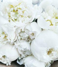 New week new bouquet. #peonies
