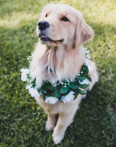 13 Times Dogs Were the Stars of the Wedding #RueNow