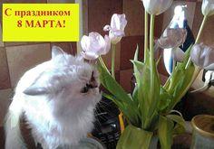 С праздником весны, любви и тепла 8 марта! #cats #кошки #gatas #animal #животные #katt #8марта #Весна #Spring #Primavera  Follow us @MalagaEiendom
