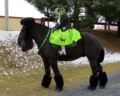 Poodle halloween horse costume