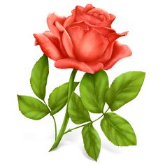 Flores e Rosas para découpage | Imagens para Decoupage