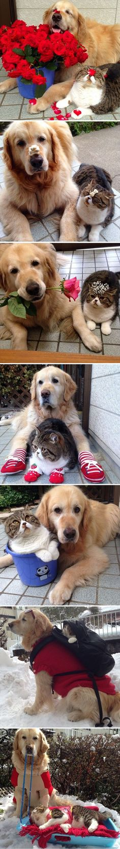 Best Friends – Adorable Kitty and Dog – My Fun Mails